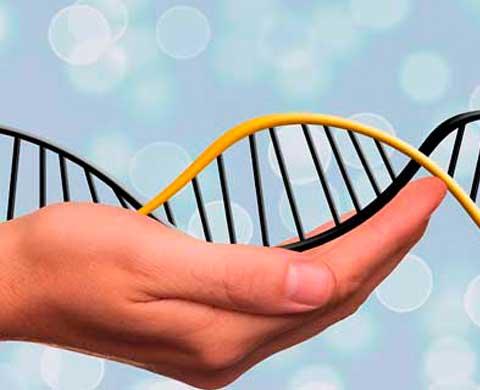 Test prenatal no invasivo en Clínica Llanes